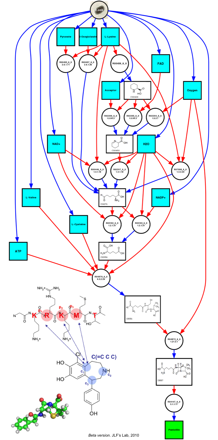 pathway-penicillin