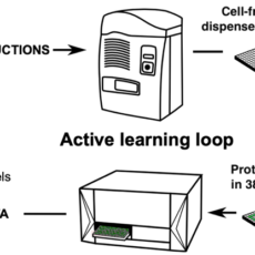Large scale active-learning-guided exploration for in vitro protein production optimization, <i>Nature Communications</i>