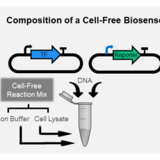Optimizing Cell-Free Biosensors to Monitor Enzymatic Production, <I> ACS Synthetic Biology </i>