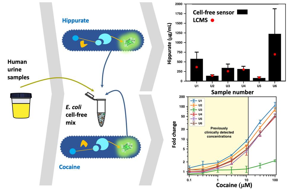 Metabolic Perceptrons for Neural Computing in Biological