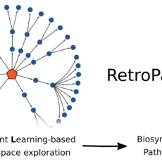 RetroPath RL: Reinforcement Learning for Bioretrosynthesis, <i>ACS Synthetic Biology</i>