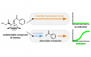Expanding Biosensing Abilities through Computer-Aided Design of Metabolic Pathways, ACS Synthetic Biology