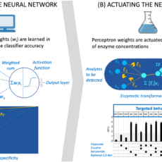 Metabolic Perceptrons for Neural Computing in Biological Systems, <i>Nature Communications</i>
