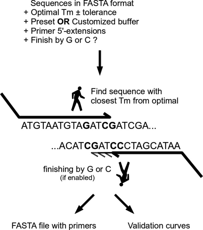PrecisePrimer: an easy-to-use web server for designing PCR primers for DNA library cloning and DNA shuffling, <i>Nucleic Acids Res.</i>