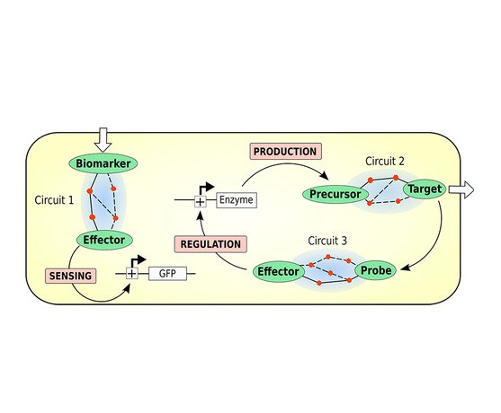 Retropath: Automated Pipeline for Embedded Metabolic Circuits, <i>ACS Synth Biol</i>